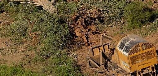 Herramientas para limitar las explotaciones de bosques nativos